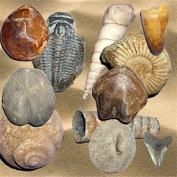 FOSSILS / Fossiles